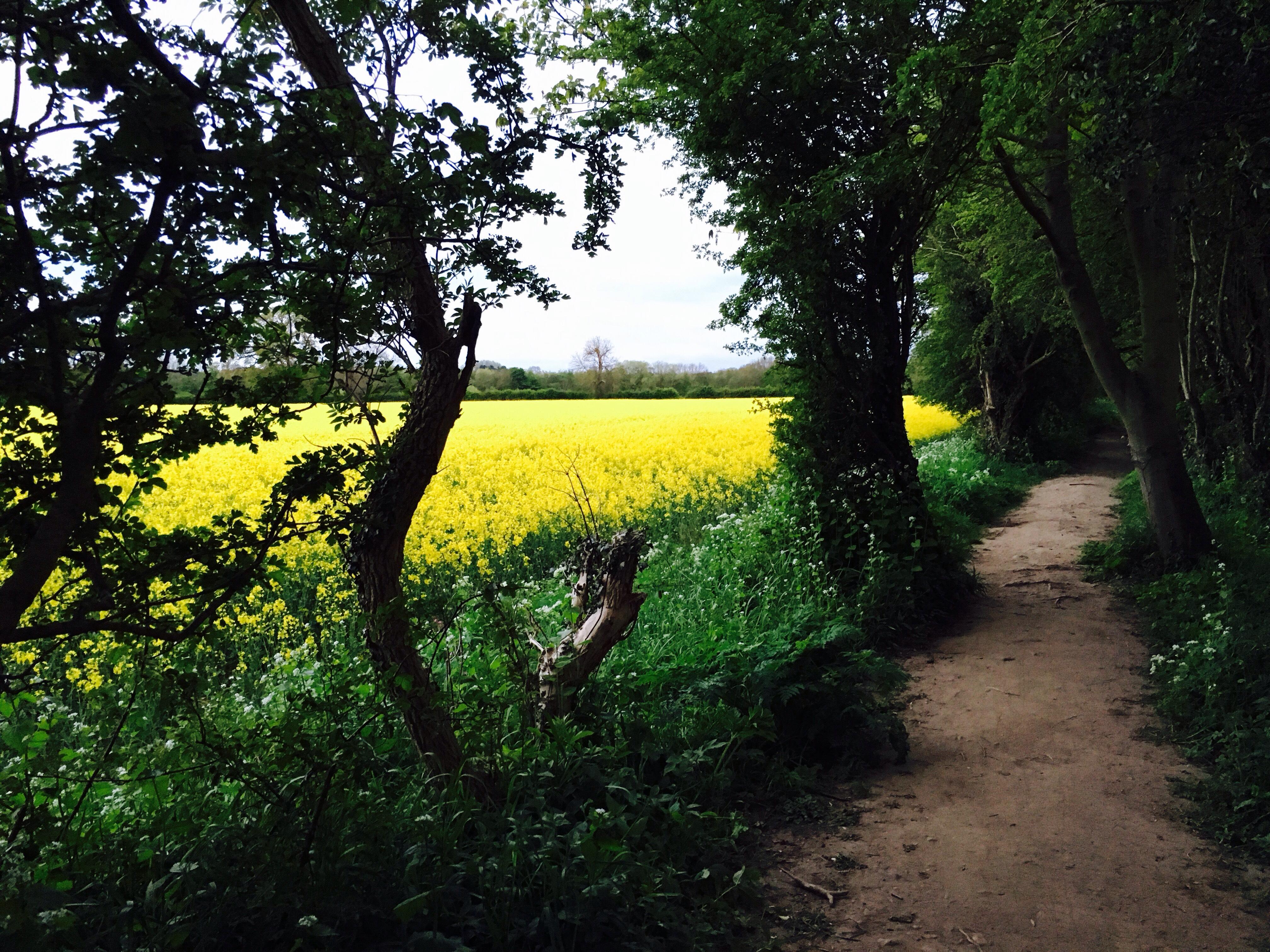 Footpath near Low Coniscliffe